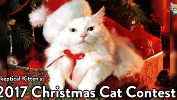 Skeptical Kitten Christmas Photo Contest