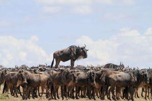 animal-encounters-wildlife-photography-awards-winners-2017