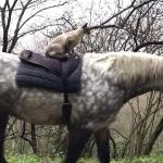The Odd Couple: Meet the Cat That Gets Around by Riding on Horseback