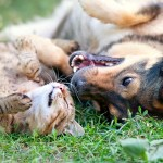 New Study: Farms with Both Cats and Dogs Have Fewer Rats