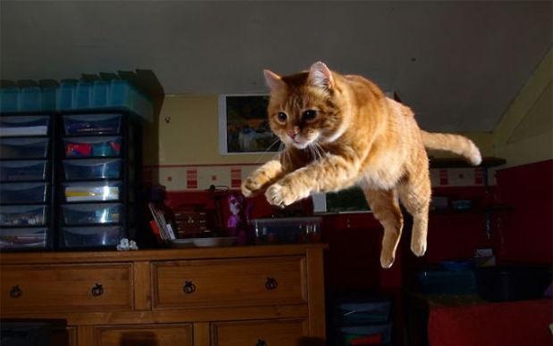 cat running at night