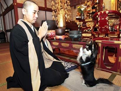 Dog_praying