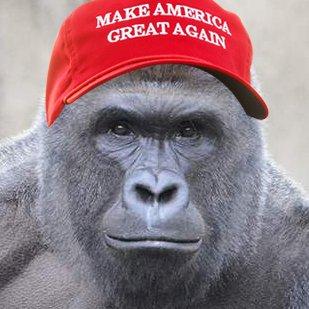 Gorilla Channel Highlights: Twitter Funnies
