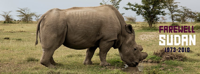 Sudan, World's Last Male Northern White Rhino, Dead at Age 45