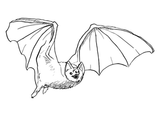 How To Draw A Bat Sketchbooknation Com
