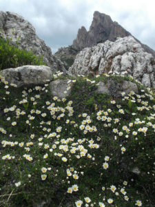 Spring-flowers-and-Sass-di-Stria - Sketching & Painting Holidays in Italy