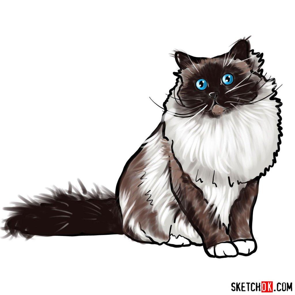 How to draw the Birman cat