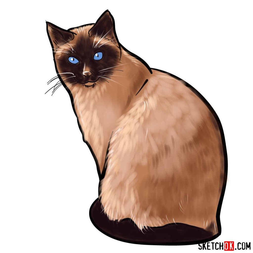 How to draw the Siamese cat