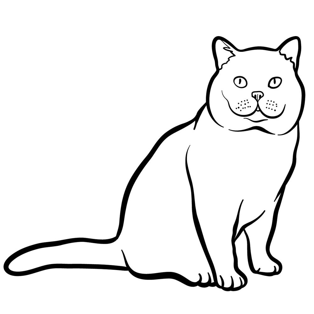 How to draw the British Shorthair cat