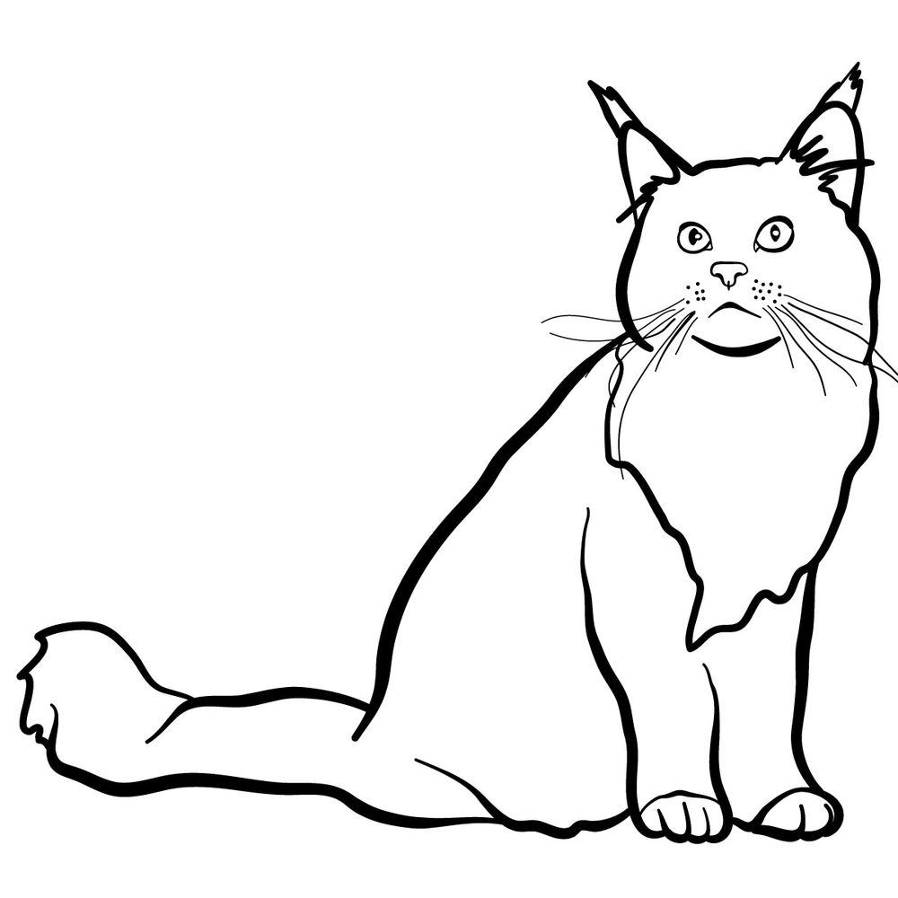 How to draw the Maine Coon cat