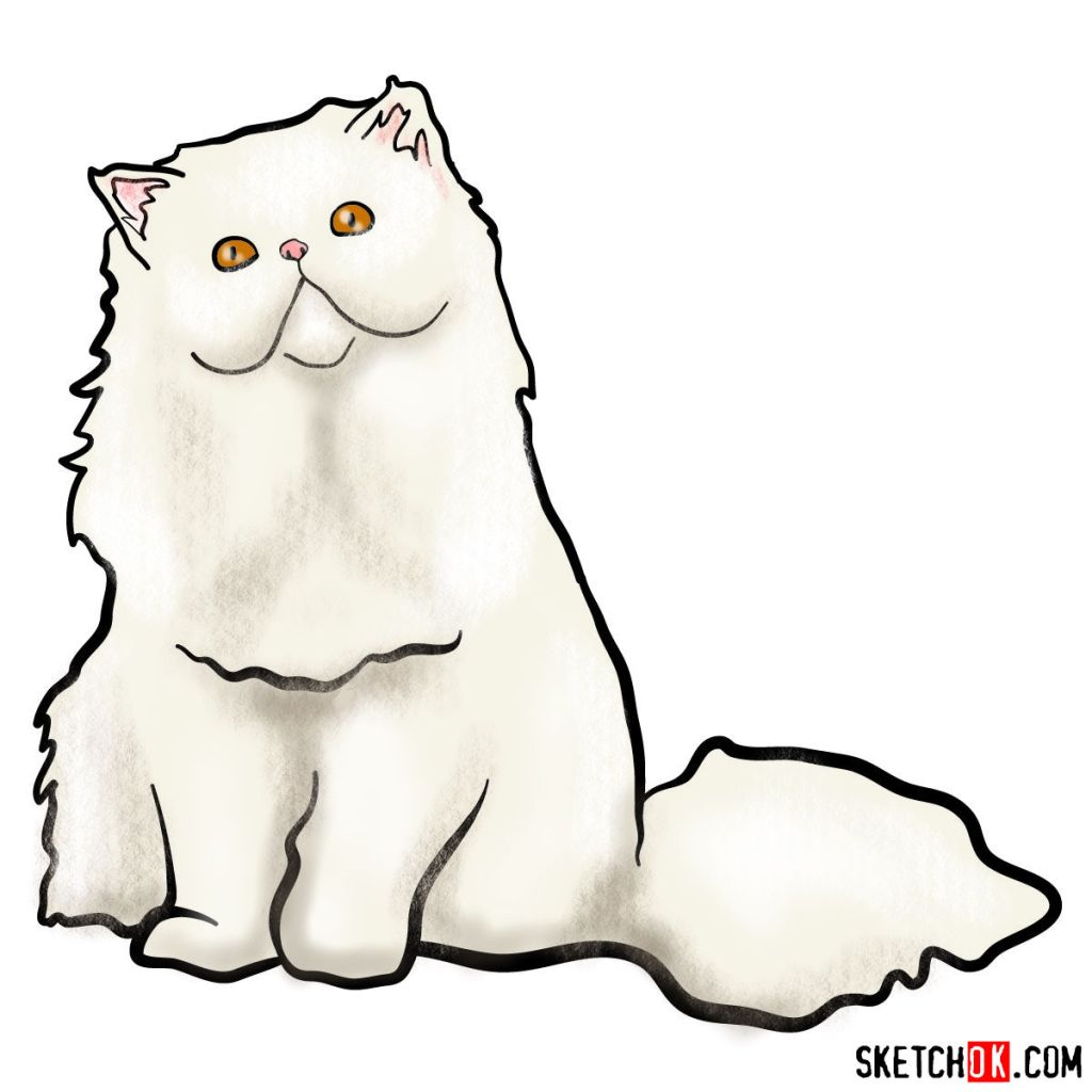 How to draw the Persian cat