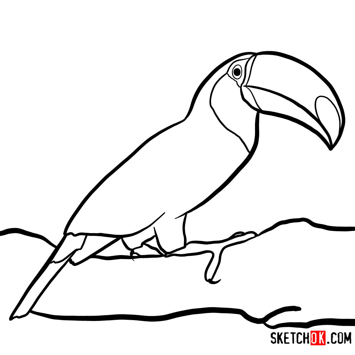 How To Draw A Toucan Birds Step By Step Drawing Tutorials
