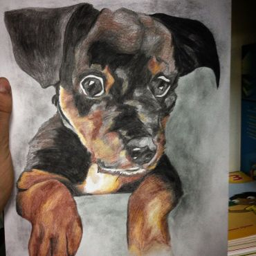 Someone wanted me to draw their dog…many times