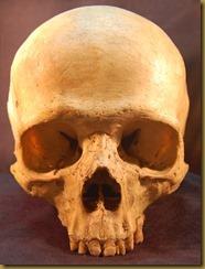 Human Skull bansidhe everystockphoto.com