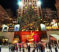 Rock Center Tree