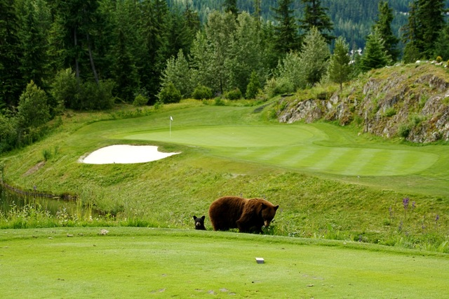Fairmont Chateau Whistler Golf Course (16)