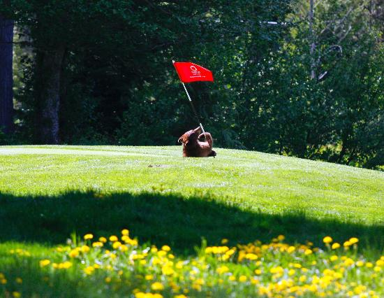 Whistler Golf Course (8)