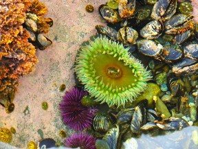 Early morning tide pooling.