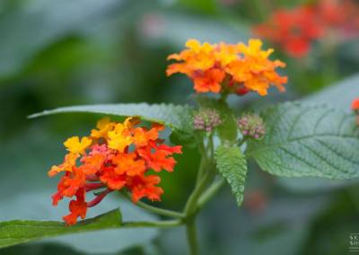 Pflanzenfotografie