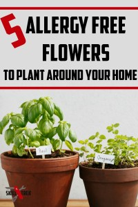 Want to plant flowers but suffer from allergies? These 5 allergy free flowers do not trigger symptoms in those suffering from allergic reactions.