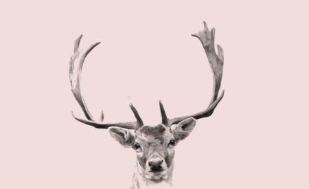 oh deer i am in pink print