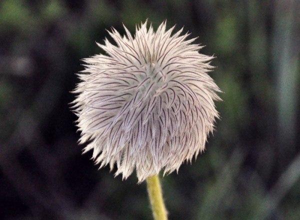 Flower by Folkert Gorter