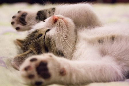 7 Ways to Spoil Your Cat for the Holidays