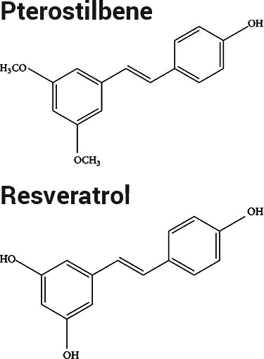 difference between resveratrol and pterostilbene