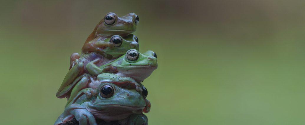 Skins IR -Tree frogs