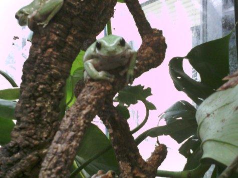 Skins - Conservation - Shuttleworth collage collaboration Amphibian study