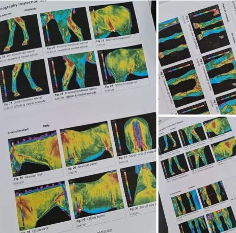 Equine Thermography Case study By Student
