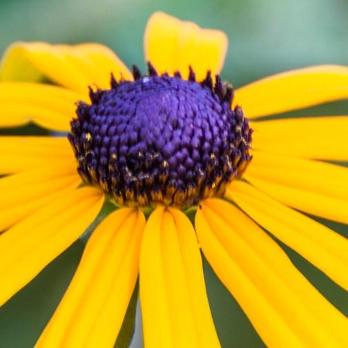 Cheerful flower