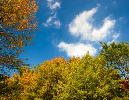 2015_10_08_North Chagrin Reservation_004