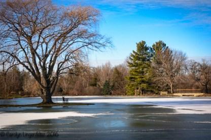 2016_01_07_Trailwalk_Holden Arboretum_0039