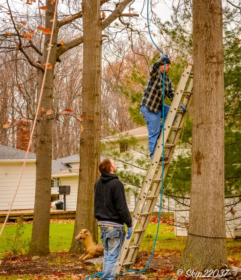 2016_12_03_backyard-birding_taking-down-the-tree_0007-edit