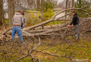 2016_12_03_backyard-birding_taking-down-the-tree_0027