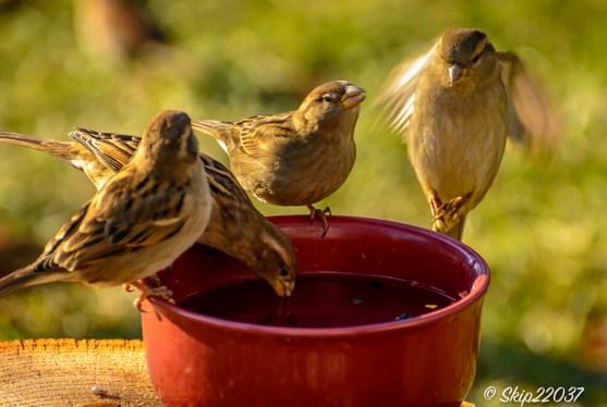 2017_01_01_places_back-yard-birding_0052