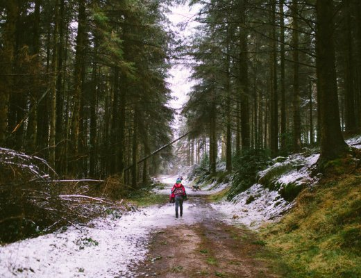Clocaenog Forest in North Wales