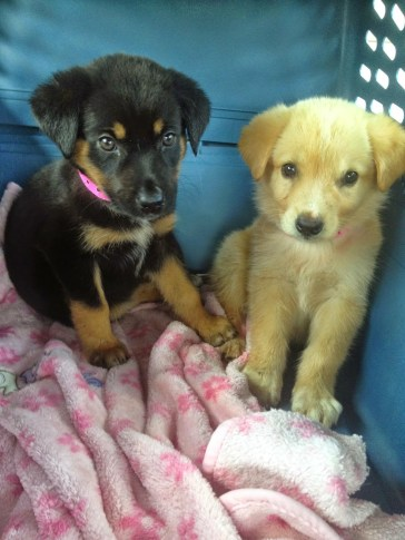 puppies in crate