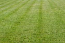 Lawn-Lawn-care-Lawn-Care- Services-Grass-Landscape-Maintenance-Mowing-leaf-removal3