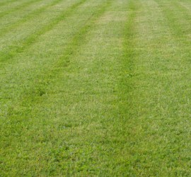 lawn-care-Kansas-City-landscaping-Overland-Park-Leawood