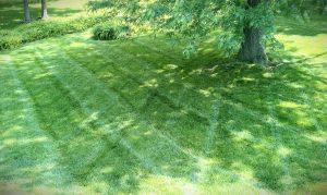 Kansas City, Lawn, Landscape, Lawn Care, Mowing, Grass, Fertilizer