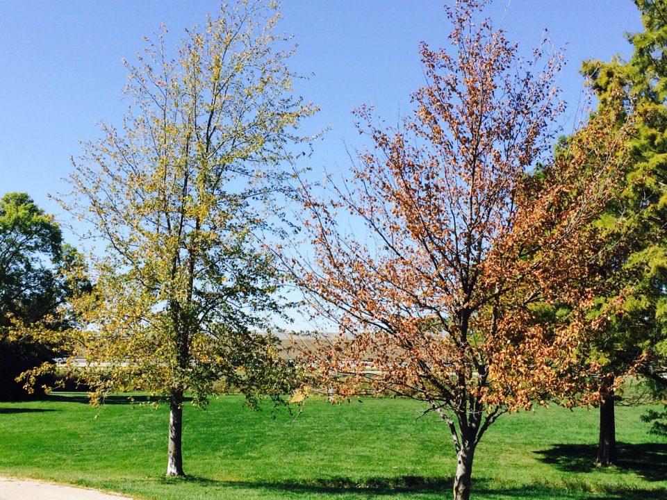 leaf-removal-fall-seeding-aerating-verticutting-aerating