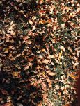 lawn-cleanup-leaf-removal-Overland-Park-Leawood-Kansas-City