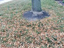 leaf-removal-lawn-cleanup-clean-up-Overland-Park-Kansas-City