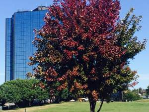 leaf-removal-lawn-care-Overland-Park-Kansas-City-fall-cleanup-Leawood