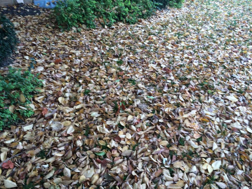 leaf-removal-service-remove-leaves-Overland-Park-Kansas-City-Leawood