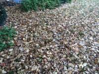leaf-removal-service-Overland-Park-Leawood