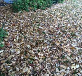 leaf-removal-service-Overland-Park-Kansas-City
