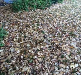 leaf-removal-service-Overland-Park-Kansas-City